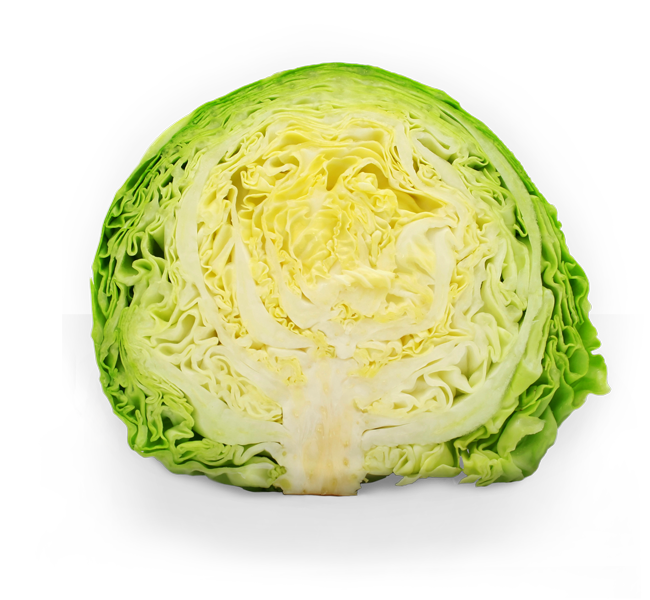 cabbage cut in half